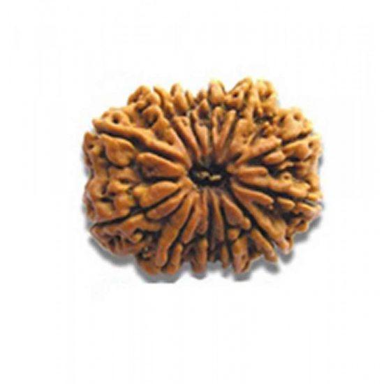 12-mukhi-rudraksh